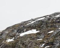 http://klausfroehlich.de/files/gimgs/th-102_1000_web_Kaperdalen,-Senja,-Norwegen.jpg